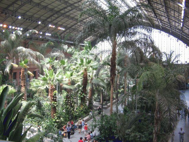Atocha駅の中の温室。冬でも温かいです。