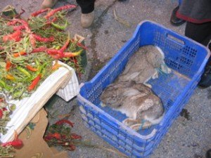 村の人はウサギの調理方法を良く知っているとか。。。