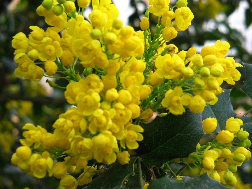 Aranjuezの王宮の庭にあったお花。黄色が鮮やかで可憐なお花でした。