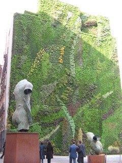 植物で覆い尽くされている壁