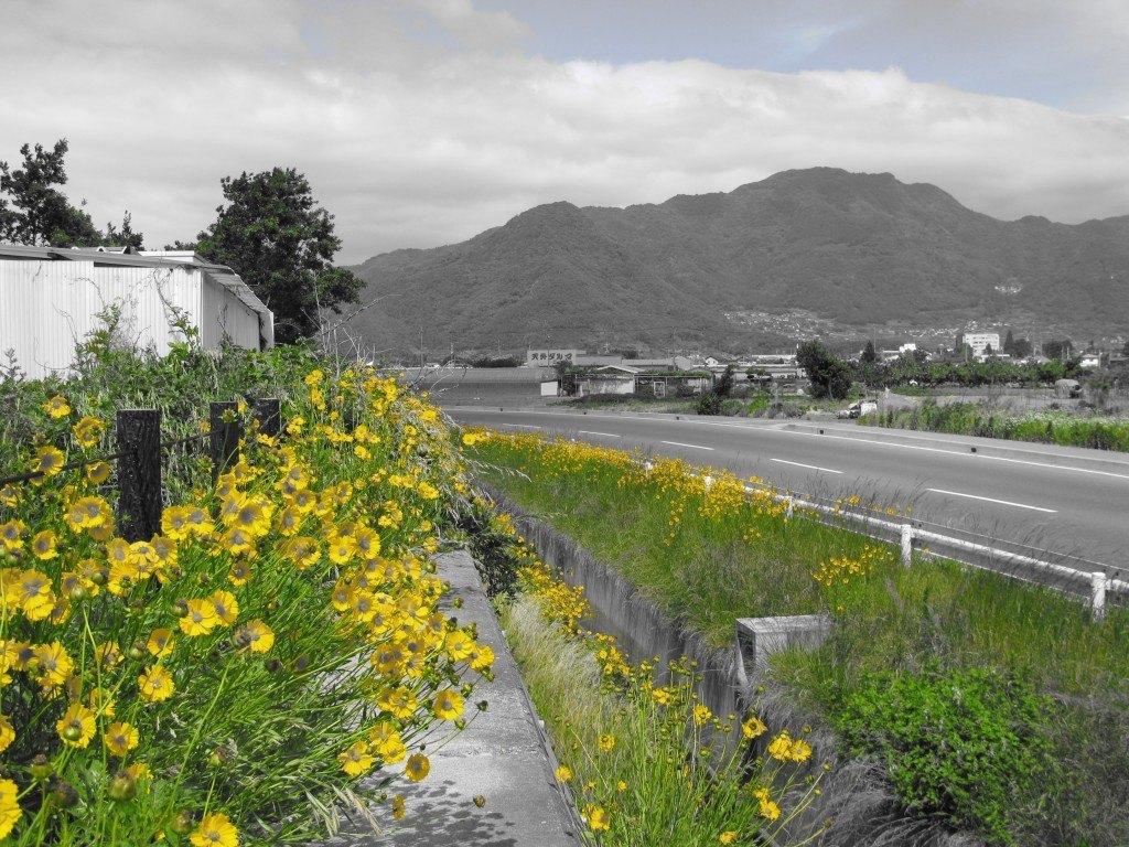 日本の優しい風景を見ると心が和みます。