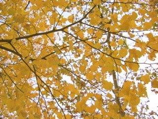 マドリッドでも秋の深まりを感じます