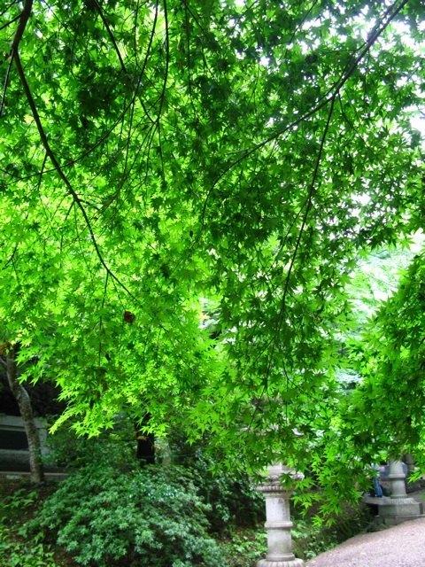 香取神宮の境内で。青々とした葉の間から差し込む柔らかな木漏れ日が、日本に戻ってきたことを感じさせました。