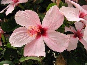 アンダルシアの花々