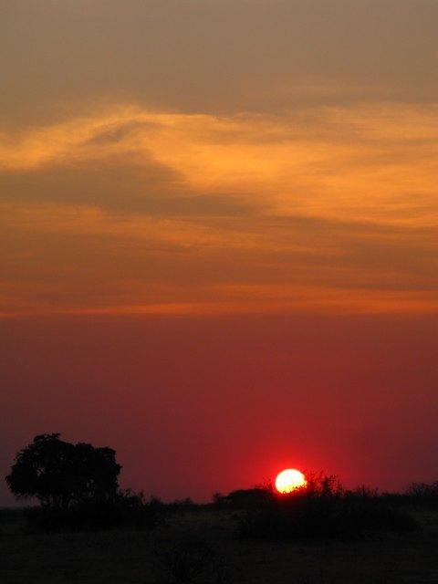 サバンナの日の出の美しさは格別。