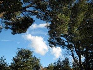 レティロ公園の木々。
