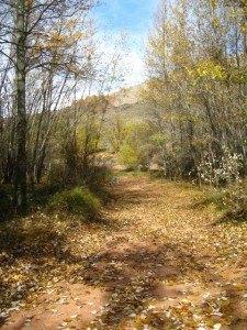秋の景色と林道。