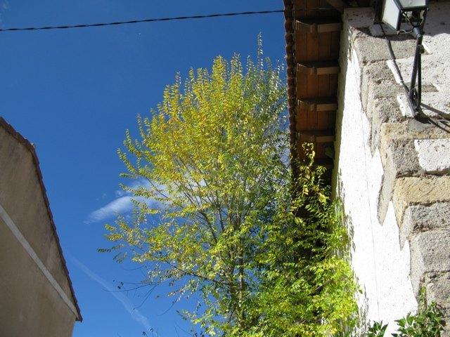 秋の青空。真っ青ですっとして、でもちょっと物悲しい青。