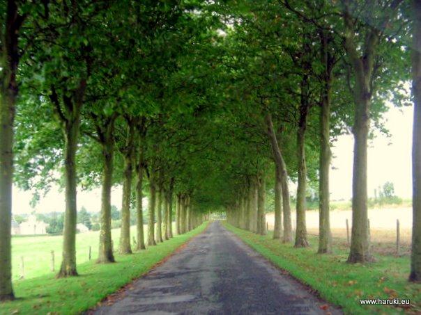フランスで通った並木道。優しい光と青々とした葉の美しさが印象的でした。