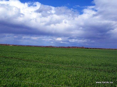 途中は一面の緑。これはトウモロコシ畑です。