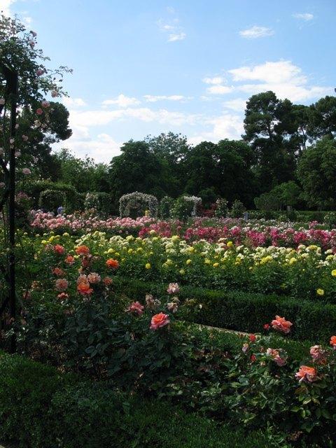 レティロ公園の中にあるバラ園。花の香りが辺り一面に漂っていました。