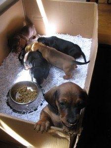 箱から出たがっている犬が一匹。