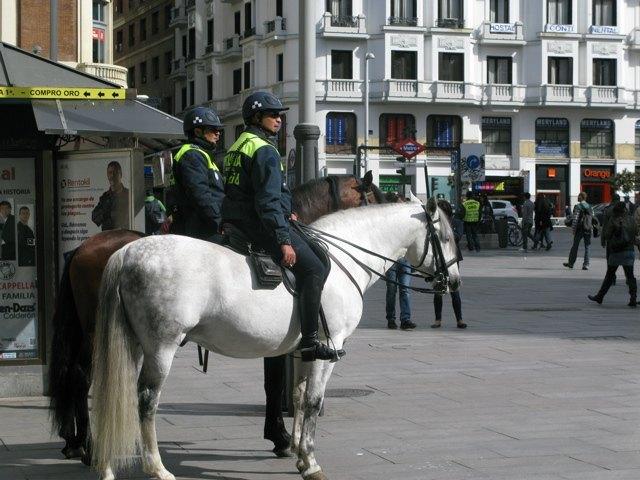 市の中心を警官がパトロールする際、たまに馬に乗っているのを目にします。