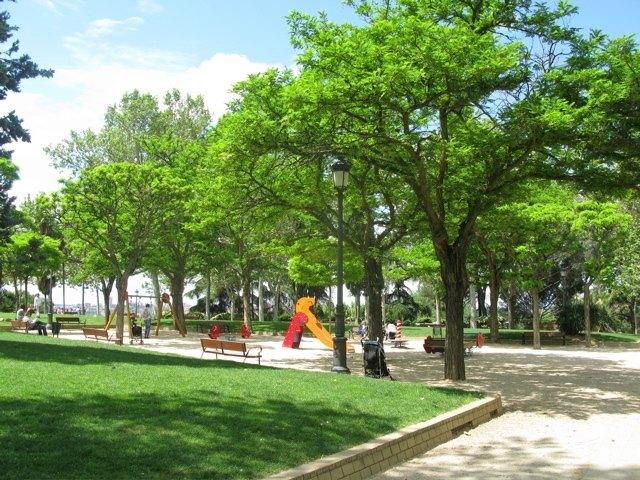 公園の緑が鮮やかになってきました。