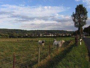 家から10分程歩くだけで、こんな牧草地が道路の脇に続いています。