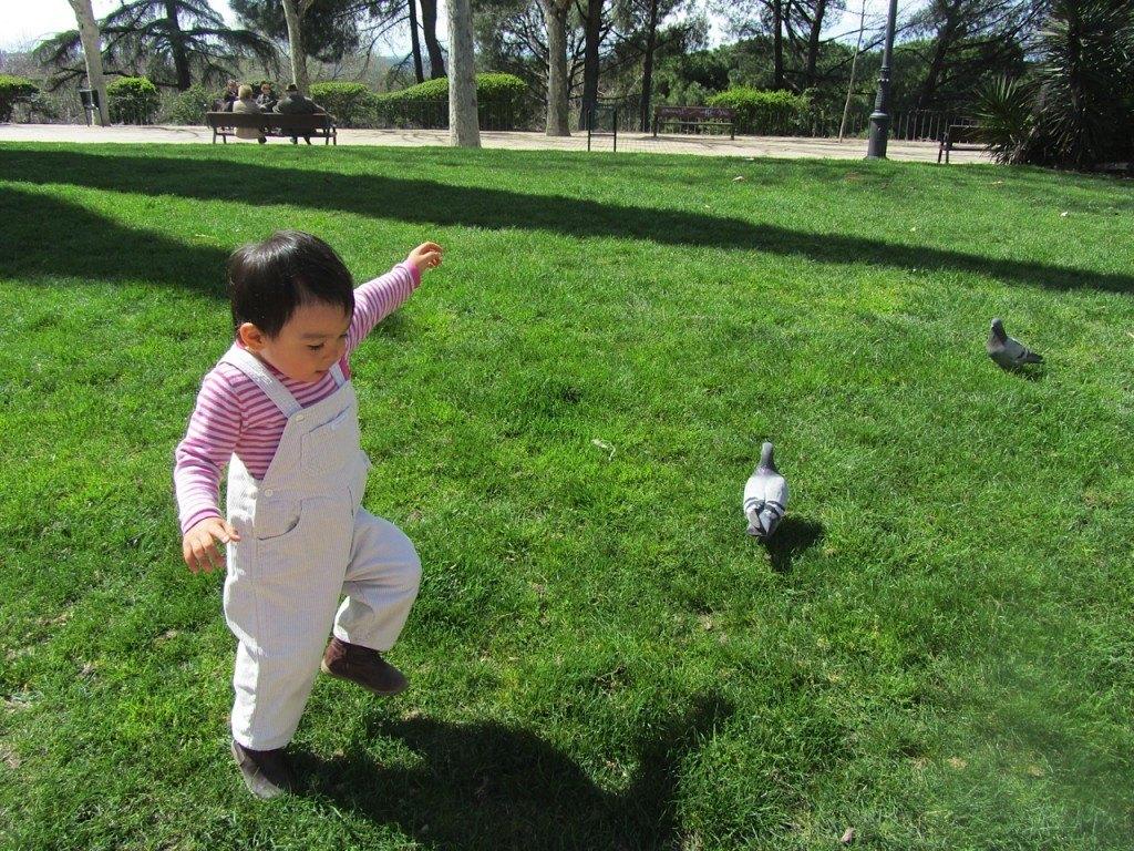 「鳩さーん!」と言って公園で鳩を追いかける娘。