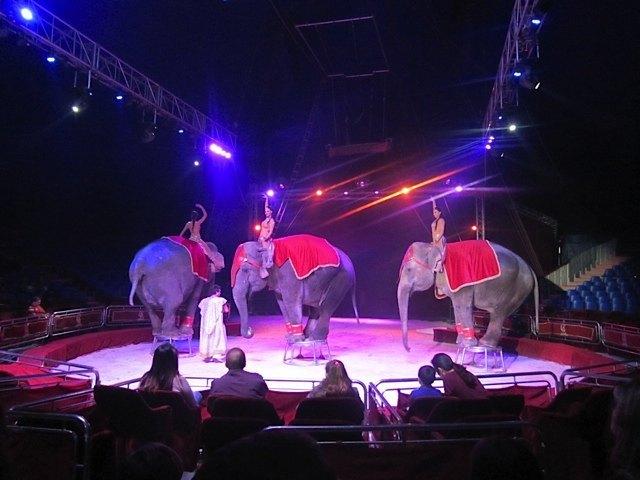 象の登場!