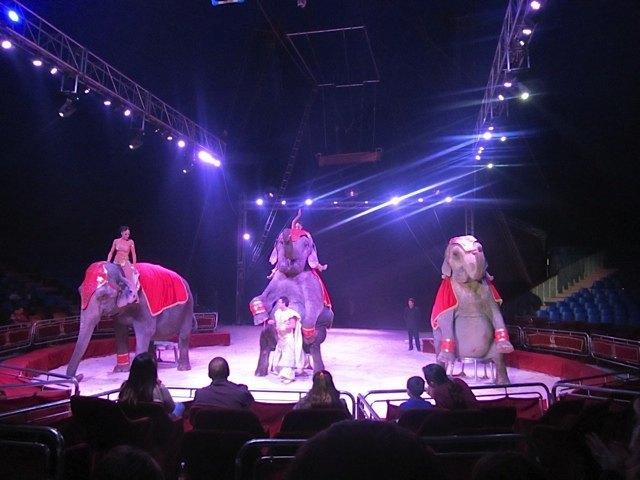象さんが座ってポーズ。