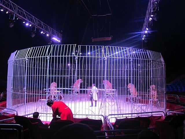 檻があるとはいえ、見ていてドキドキしたライオン&虎のショー。