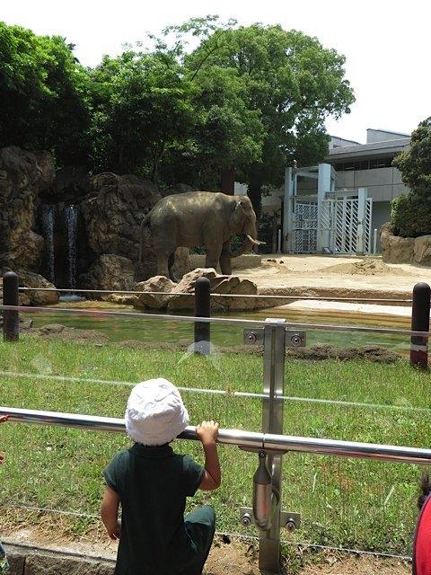やっぱり象さんは欠かせません。