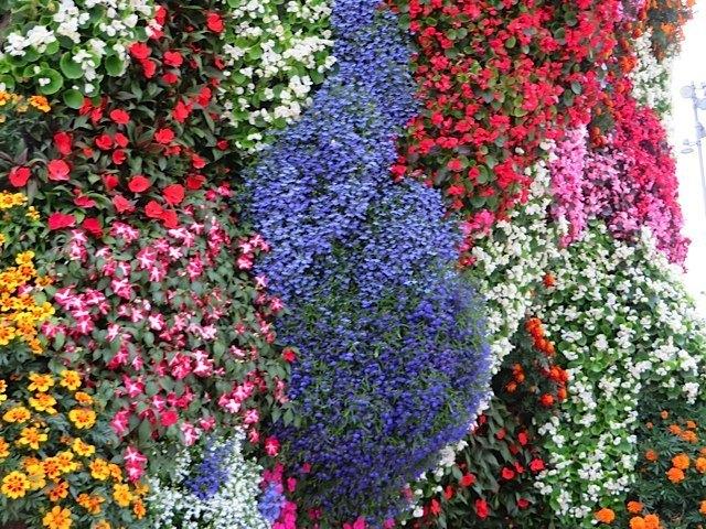 近くで見ると花が綺麗に植えてあるのが分かります。