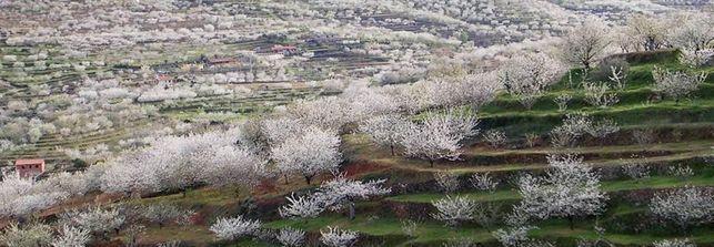 ヘルテの谷の様子。