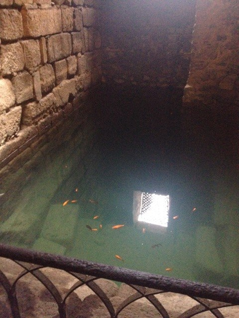メリダのアルカサバの中にあるアルヒベ(貯水池)。金魚のような魚が泳いでいました。